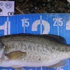 小二千二十年三月五日魚